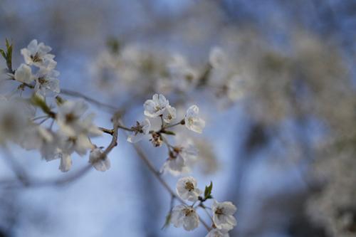 201944-円山公園_190404_0003.jpg