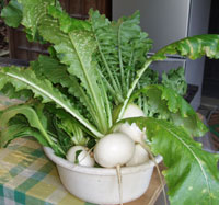 東慶寺自家製の野菜