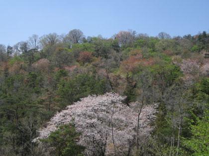 美しい山に囲まれた本山です