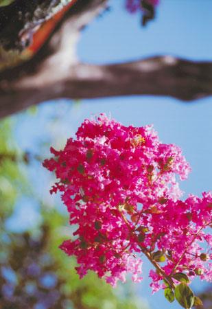 暑さに負けぬ花