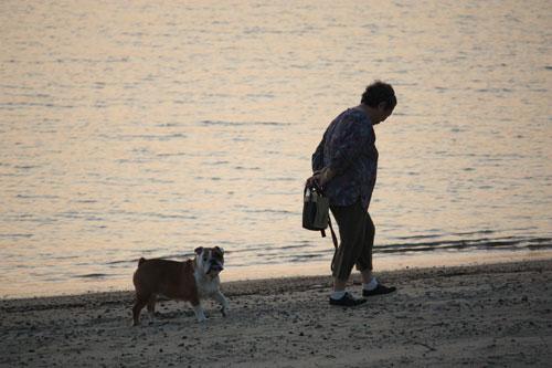 散歩する老人とブル