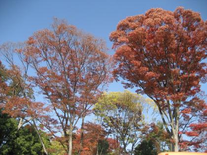 大徳寺駐車場横の紅葉(昨年)