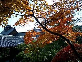 多宝殿から見る紅葉と庫裡