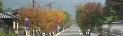 奈良の紅葉
