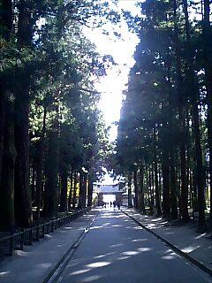 杉の大木が並ぶ参道